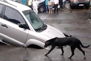 Tiny Dog Provokes A Large Sinkhole To Swallow An SUV